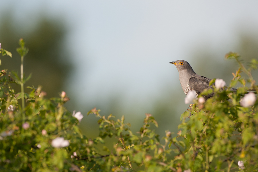 Birdwatching GOL_primavera 2017