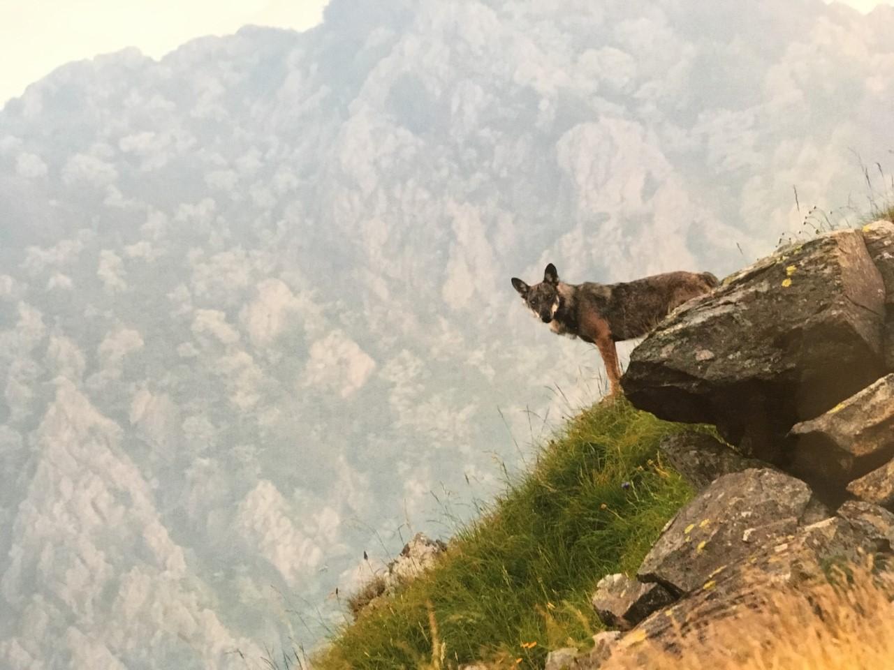 Serate naturalistiche in Val Trebbia